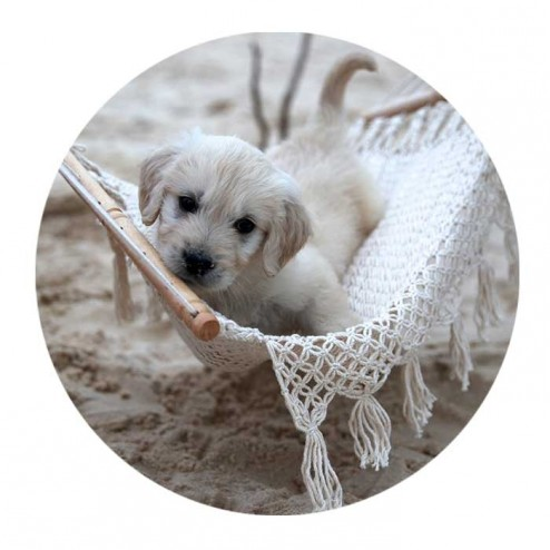 Hamaquita Hammock for Puppies, Kittens, Dolls and Toys