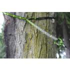 Ultra-Lite Tree Straps